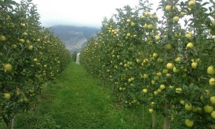 Valorizzazione della frutticoltura della Barbagia – Avviso Pubblico –