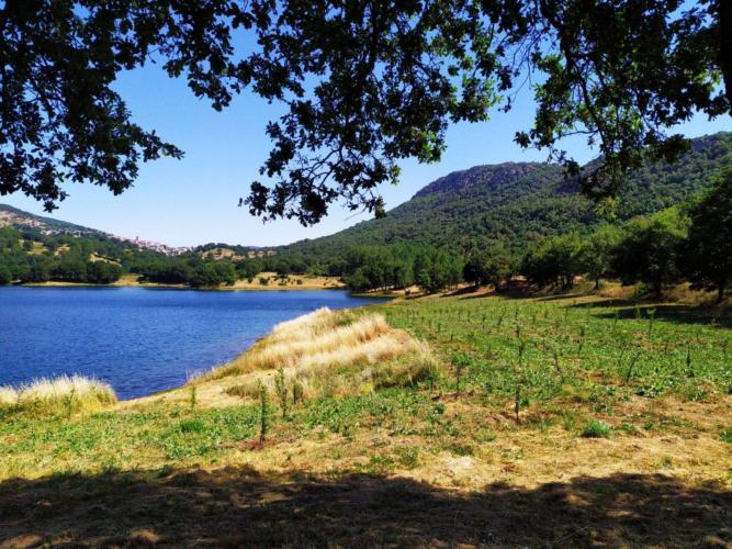 Ciliegi, peri, meli e noci sulle sponde del Lago di Gusana